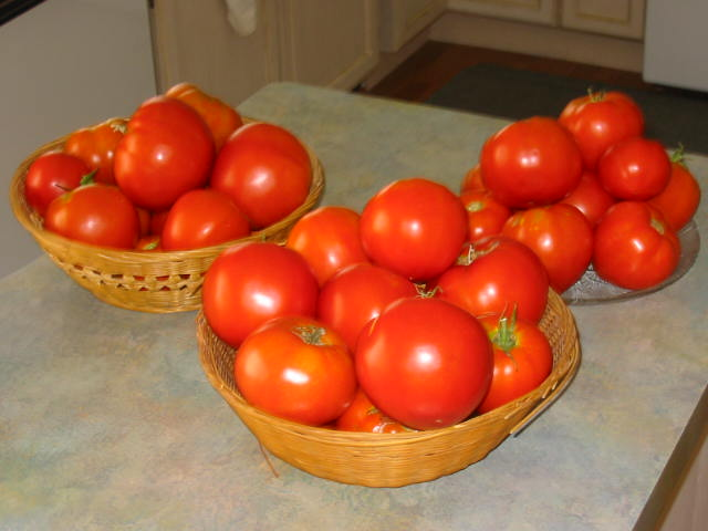Nothin' better than homegrown tomatoes
